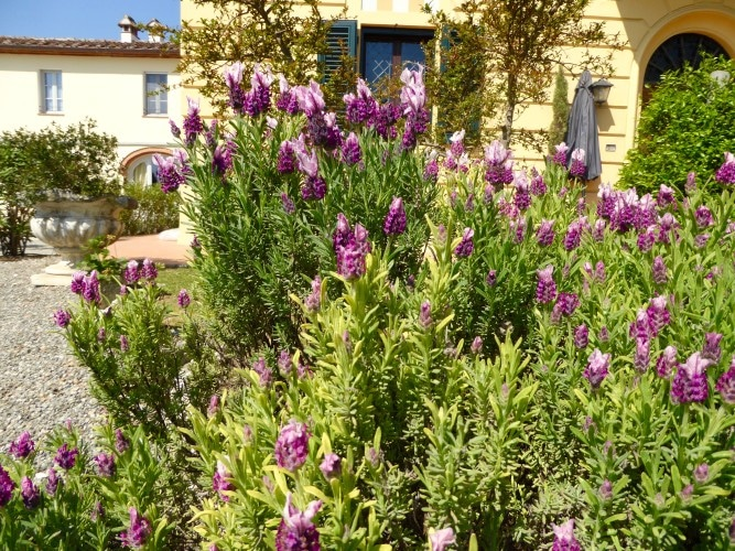 pianta con fiori viola casa vacanze villa cerine