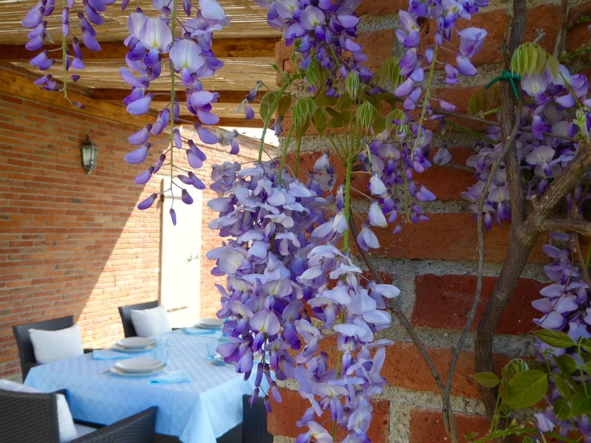 fiori zona pranzo esterna casa vacanze villa cerine